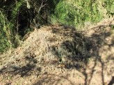 huerta - pile of weeds, drying 23-9-15