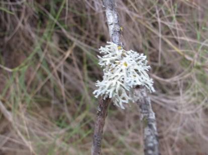 lichen1 14-4-15
