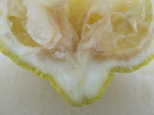 lemon-segment-squeezed