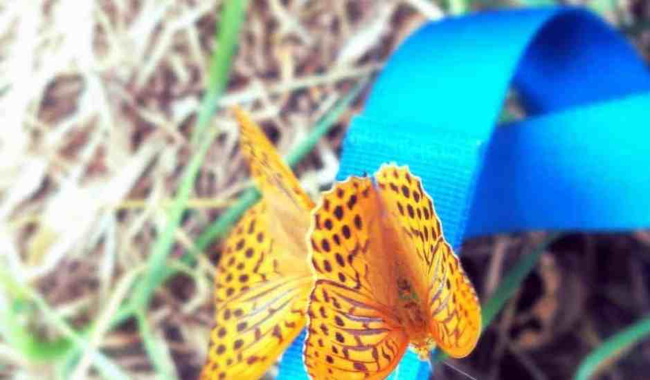 Butterfly on my backpack, FR (2014-07)