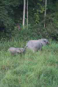 Elephant mama and baby in Lope National Park, Gabon (2012-01)