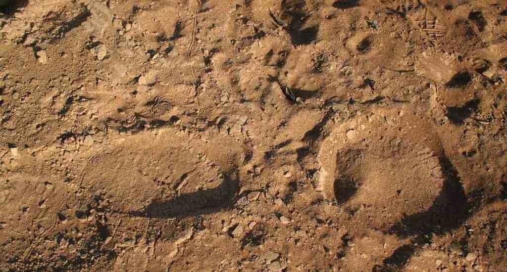 Elephant tracks at Deux Bales National Park, Burkina Faso (2011-12)