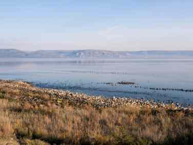 Cormorants about to take flight, Capernaum, Sea of Galilee, Israel (2017-01-22)