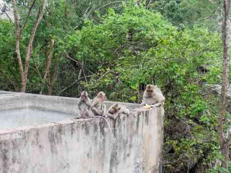 Monkeys on Phnom Sampov, Battambang, Cambodia (2017-04)
