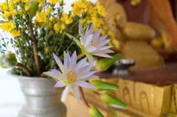 Lotus at Hsinbyume Paya, Mingun, Mandalay, Myanmar (2017-09)