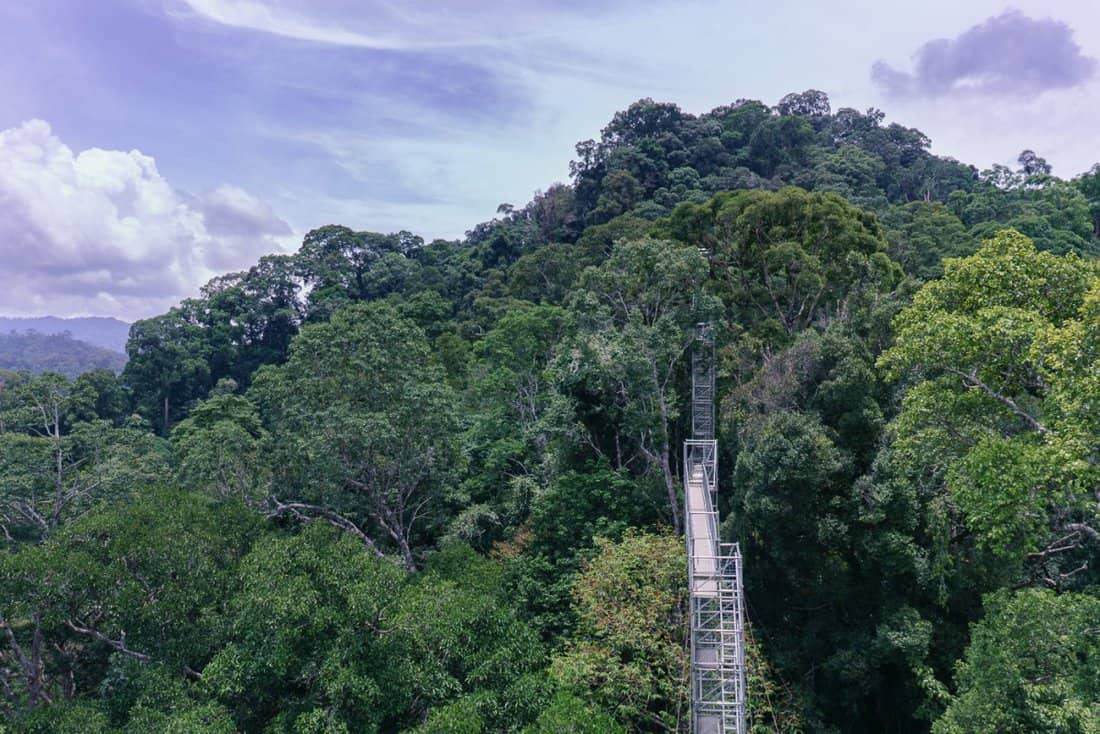 Belalong Canopy Walk in Ulu Temburong National Park, Brunei
