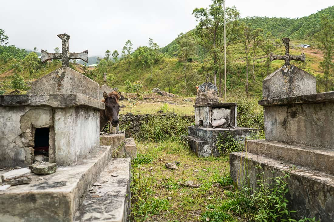 Horse on the cemetery in Hato Builico, East Timor