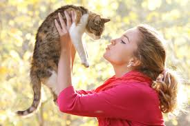 Cat Language:Know 10 Real Signs And Gestures