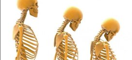 What is the Composition of Bone;What Is Bone Composition percentages?