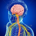 15 Facts About Nervous System;You Must Know