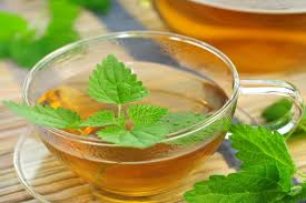 What Is Nettle;10 Facts You Must Know
