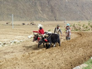 Traditional Agriculture