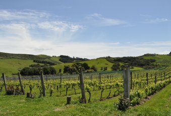 Stonyridge vineyards in picturesque valleys