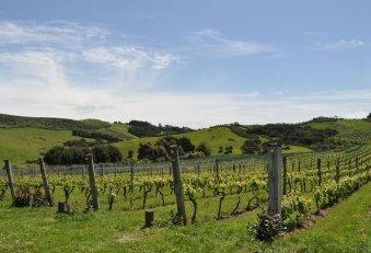 Stonyridge vineyards in picturesque valleys