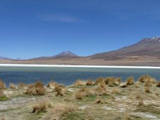 Bolivia Lagoon and grass