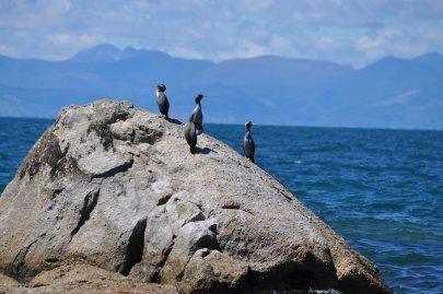 Birds on the Abel Tasman coast line