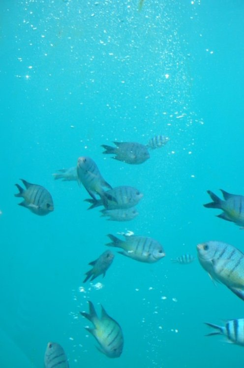Fish at Knuckle reef