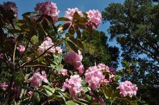 Wellington botanical gardens