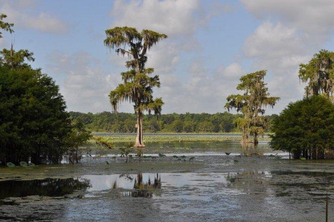cajun swamp tour 1