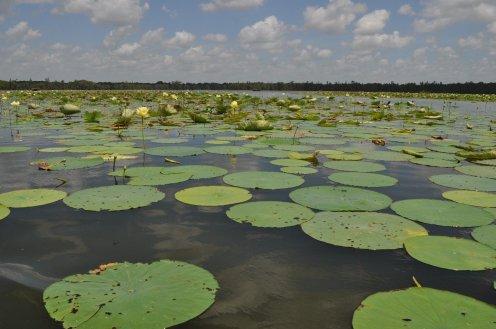 cajun swamp tour 12