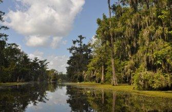 cajun swamp tour 5