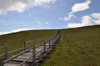 Yak Meadow