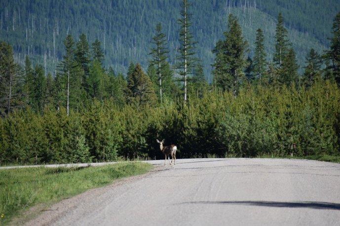 Glacier National Park 71
