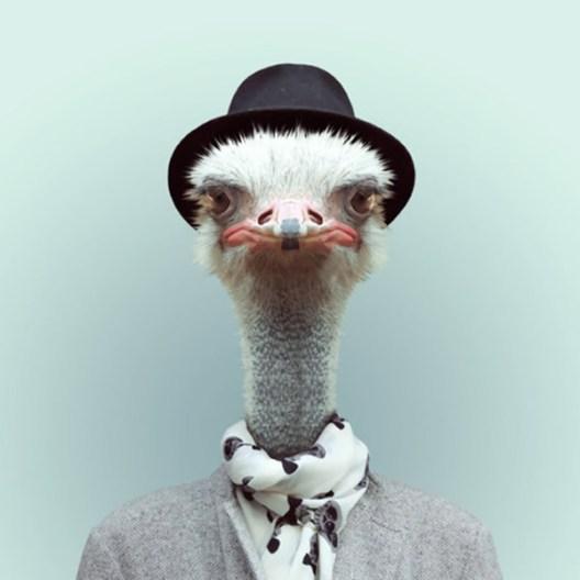zoo-portraits-9