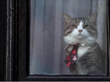 El gato de Julian Assange sentado detrás de una ventana en la embajada de Ecuador, en Londres, Reino Unido. 6 de febrero de 2018