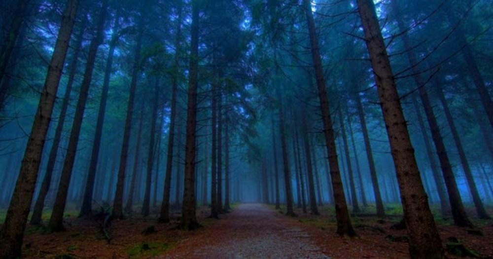 4 bosques en Gran Bretaña a los que no entrarías por la noche