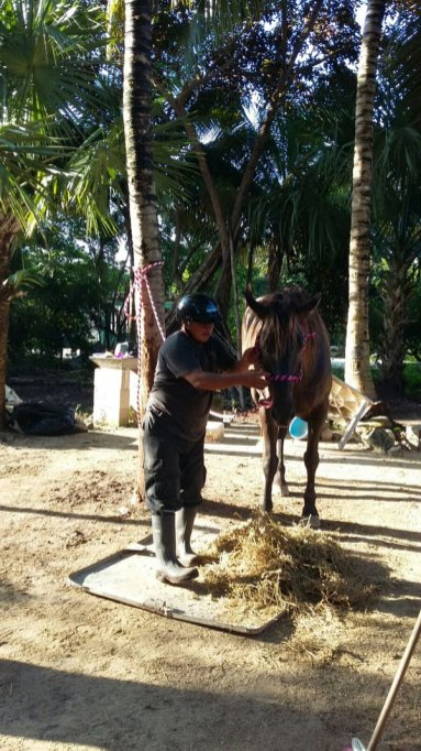 caballos tulum