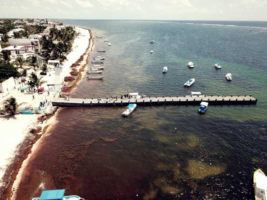 f7eb81fd ¡FABRICAN ZAPATOS CON SARGAZO Y PET!: Presentan empresarios de Guanajuato  una nueva alternativa para aprovechar el alga que recala masivamente en  playas de ...