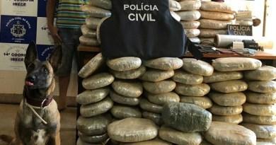 Índice de apreensão de drogas já supera 2017 Na Bahia