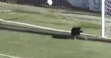 Vídeo: Cachorro evita gol na Terceira Divisão da Argentina