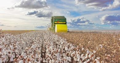 Bahia entra na reta final da colheita do algodão