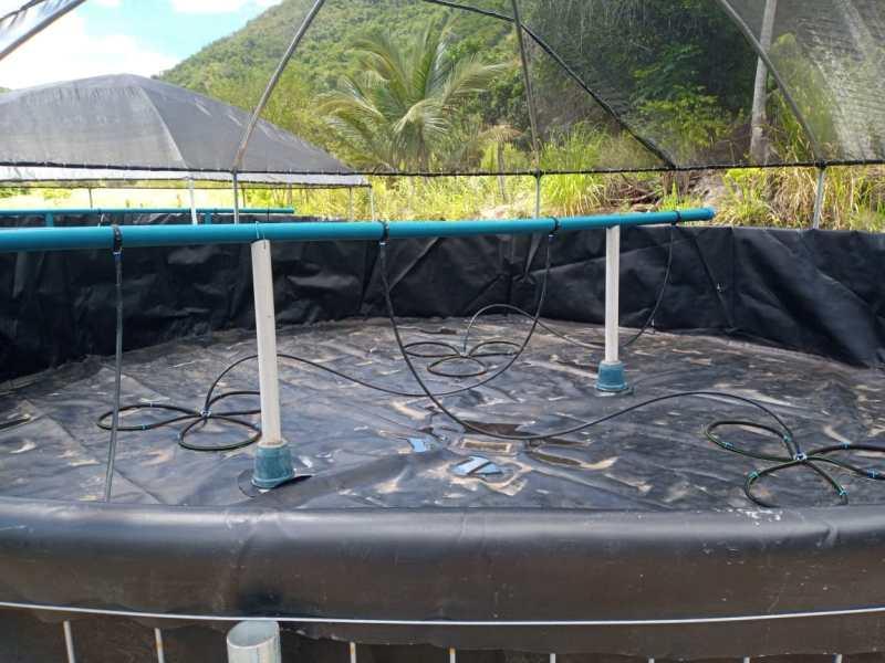 Tecnologia em sistema de aquicultura prevê aumento de 900% na produção de  peixes na zona rural de Caatiba – Notícia da Bahia