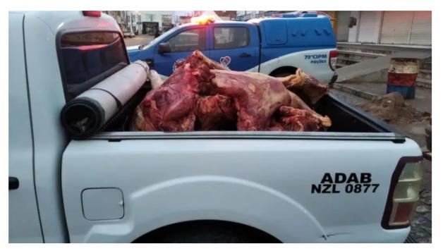 Abate clandestino resulta em prisões, 2 toneladas de carne e seis mil galinhas apreendidas na Bahia