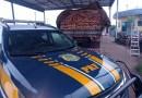 PRF apreende madeira transportada ilegalmente na BR-153 em Araguaína