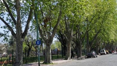 Photo of Más árboles en la ciudad