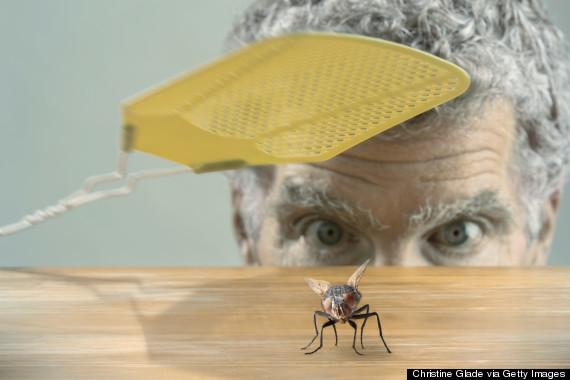 Em Ohio, é proibido matar mosquitos num raio de 50 metros de uma igreja