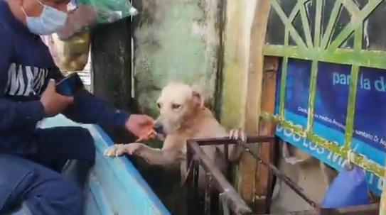 Marinos rescatan a perrito en medio de inundación en Tabasco, (video) 1