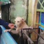 Marinos rescatan a perrito en medio de inundación en Tabasco, (video) 4