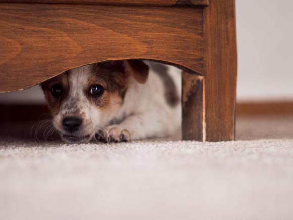 Consejos para tranquilizar a tu perro en época de fuegos artificiales 4