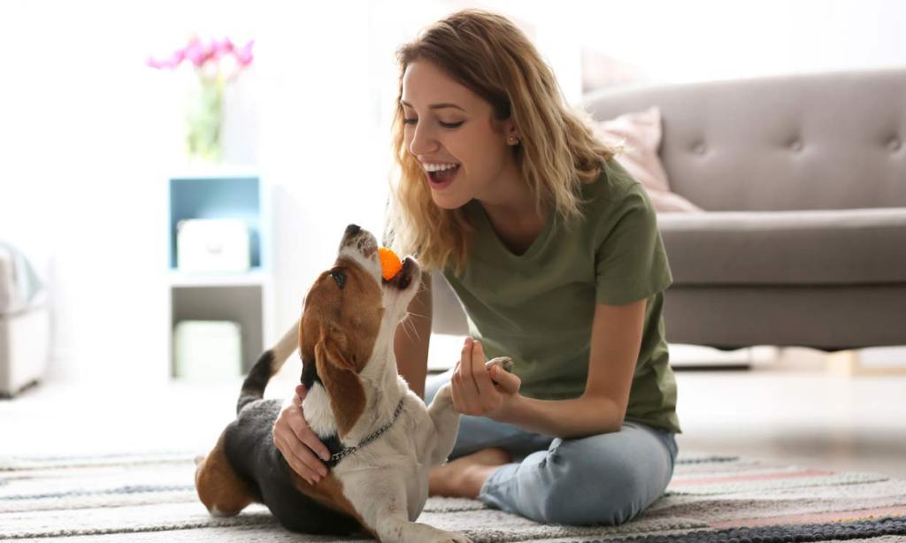 Consejos para tranquilizar a tu perro en época de fuegos artificiales 7