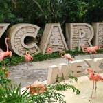 """Tras la muerte del menor Leonardo """"N"""" en parque Xenses, Grupo Xcaret deberá pagar multa de 150 mil pesos 4"""