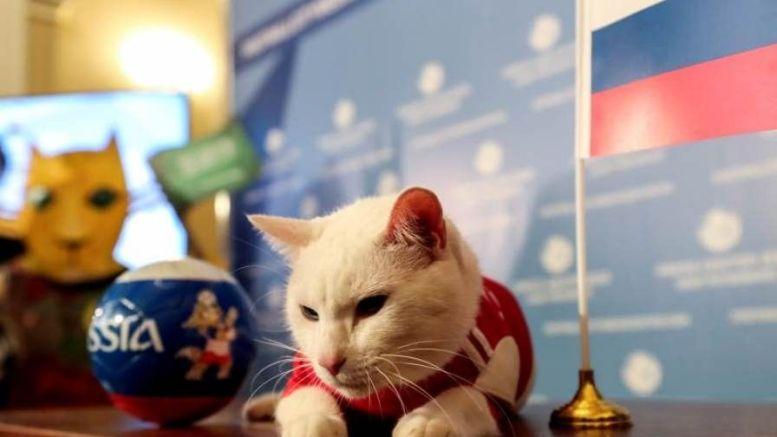Gato que predice resultados del mundial de rusia