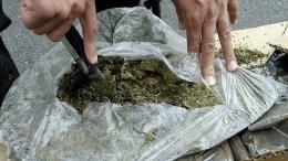 trafico de marihuana