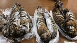 Tigres-de-vietnam