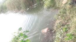ahogado en laguna