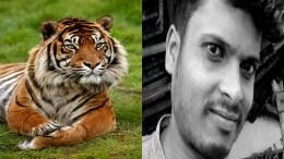 profesor deborado por tigre